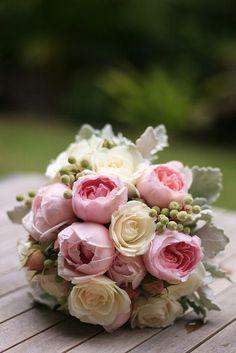David Austin roses <3