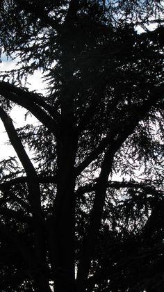 Treepiphany