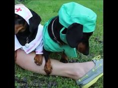 Puppy Emergency Response Drill! [Extended Vine Video]