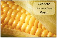 Earthworms and Marmalade: The Secrets to Growing Great Corn: Number 5 Was a Real Eye Opener For Me!