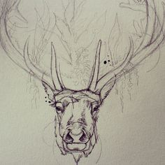 not a huge fan of the antlers themselves but had to show off the awesome artwork