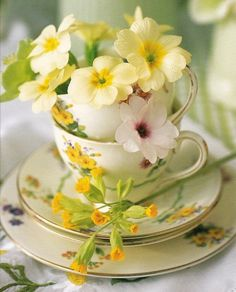 teacups & yellow flowers