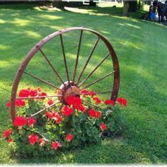 simple flower garden ideas, wagonwheel, wagon wheels, red geranium, yard idea, red flowers, front yards, wagon wheel gardening ideas, old wagons