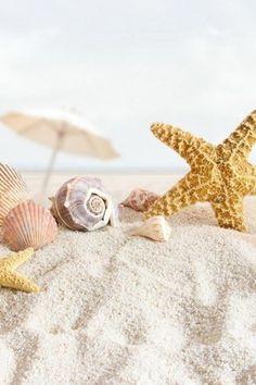 sea shell, beach bounti