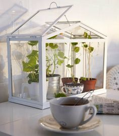 For the urban gardener with limited real estate, a mini greenhouse breathes life into a small kitchen.