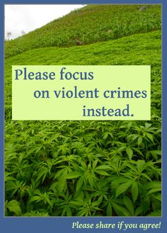 Please focus on violent crimes instead.  #warondrugs
