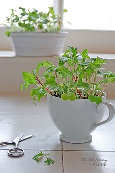Growing MicroGreens by The Art of Doing Stuff plant, grow microgreen, tiny gardens, how do you grow micro greens, art, herbs garden, growing microgreens, teacup, container gardening