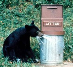 What to do if you see a bear in the #Smoky #Mountains