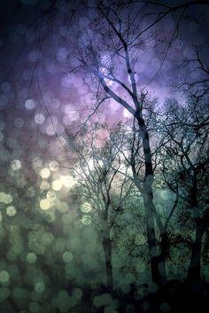 "Druids Trees:  ""The Winter Fairy Sky,"" by deepintheforestcat. #Trees."