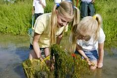 Summer's a great time to explore a shore, whether it's a pond, stream, or marsh.   Xplor