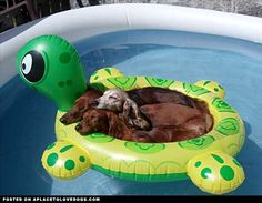 this is the best thing ever. turtle and wieners.