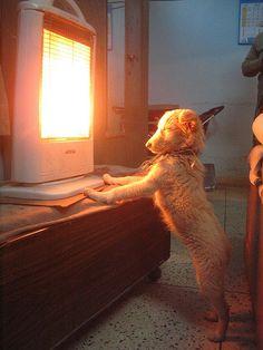 dog shame, funny dogs, tan lines, funni dog, collar