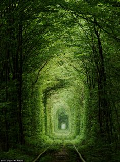 If I ever get to the Ukraine, this will be one of my stops: The Tunnel of Love. #trains #romantic train tracks, train tunnel, tree, green, path, forest, wonderful places, factories, trains