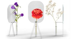 Big Bloom - vase that magnifies your flowers