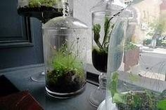 How to Make an Ecosystem in a Bottle thumbnail