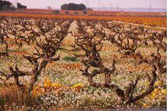 Domaine Rouge-Bleu -- wonderful wines!