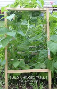 Build a #DIY hinged trellis for happy beans