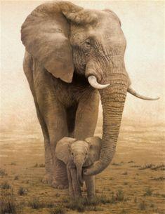 ♂ Wildlife photography #mammals #animals #Elephant Momma and Baby