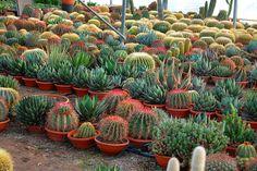 Cactus and succulents by Leo_González, via Flickr