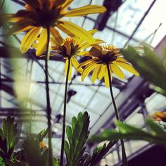 Photo from the WVU Greenhouse #Spring #Greenhouse Photo Cred: @tiffanyfess