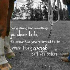 Horse quote in life and riding