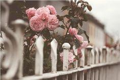 roses #roses #flowers