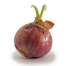 file onion, onions, onion pleas, extra onion, red onion, onion grow
