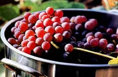 Considering a grape arbor.  There's nothing like fresh grape juice!