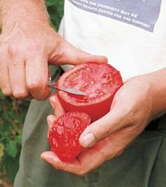 How to Grow Beefsteak Tomatoes. In the mood to grow some giant tomatoes? Get some tips here http://www.vegetablegardener.com/item/3583/how-to-grow-beefsteak-tomatoes beef tomato, giant tomato, fine garden, beefsteak tomato, garden articl, tomatoes, veget garden, tomatoe planting beefsteak, salt