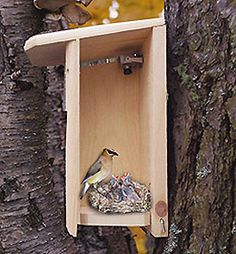 Backyard Birdhouse w
