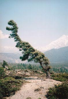T Rex Tree