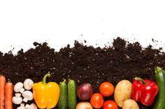 The No-Roto-Till Garden | Stretcher.com - Save money while starting a garden