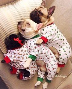 Dreamin' French Bulldogs.