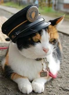 Tama Cat Of Japan, Tama Is The Stationmaster And Operating Officer Of Kishi Station In Japan. She Reinvigorated The Station And Train Travel In Her District. She Also Has A Train With Her Picture On It And Really Cute Interior Decor. I Want To Ride The Tama Train One Day! by cara