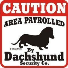 lol crazy dog lady, dachshund, caution, crazi dog, dog ladi, weiner dogs