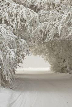 Snow Snow Snow .....