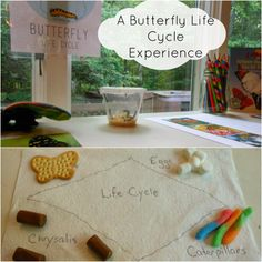 A Butterfly Experience