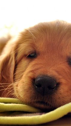 """Article: """"Useful Information for Dog's Vision"""" and Rare Dog Picture Gallery 