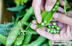 A Beginner''s Guide to Fruit and Vegetable Gardening via @SparkPeople