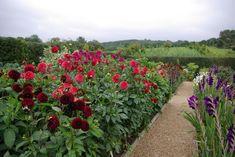 garden decor, garden design, beauti garden, sarah raven, cutting garden, cut garden, garden interior, design garden, raven cut