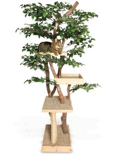 Cat tree - now THAT would make the cats happy!