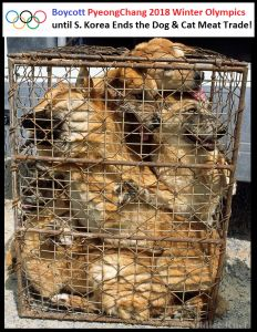 If you have a little time here is a whole page of petitions to sign against dog consumption in South Korea.
