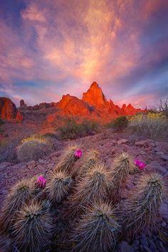 ✯ Arizona