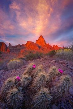 marc adamus, landscap, arizona homes, natur, gardens, desert garden, beauti, place, deserts