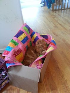 So about what I said...: Family Photos: On a cat and a quilt