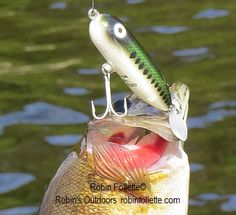 Smallmouth bass caught on a Heddon Baby Bass Torpedo