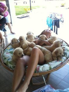 So many cute, adorable puppies!!