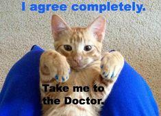 @thebloggess @Jennifer Lawson    Dr. Who? Hunter S Thomcat FTW!