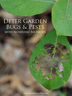 Deter Garden Bugs and Pests with Nontoxic Methods | Herbal Academy of New England