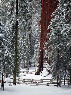 Parque Nacional de las Secuoyas California